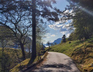 FjordCruise1